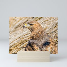 Hawk on a Hunt. Nature Photography Mini Art Print