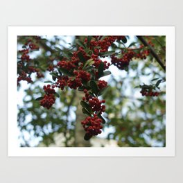 The Berries Art Print