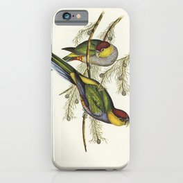 Red-capped Parakeet (Platycercus pileatus) illustrated by Elizabeth Gould (1804-1841) for John Gould iPhone Case