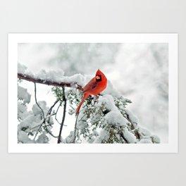 Cardinal on Snowy Branch #2 Art Print
