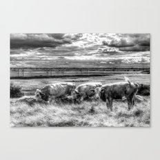 Late Afternoon Cows Canvas Print