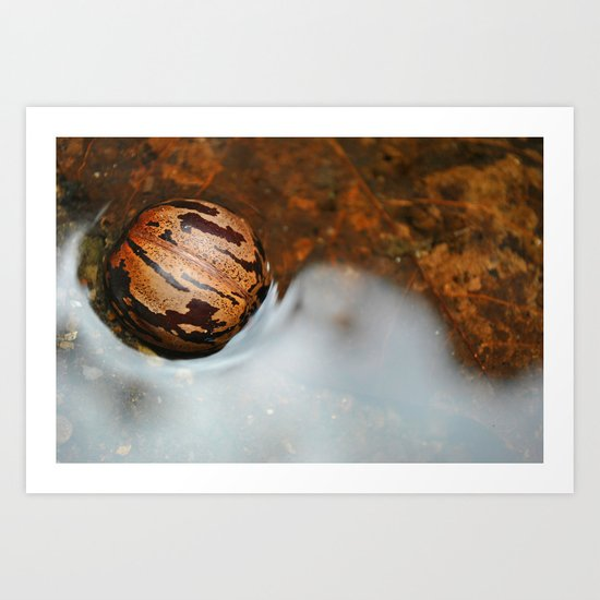 Shell Swimming Art Print