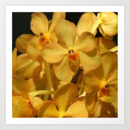 Golden Vanda Orchids Art Print