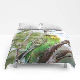Sweet BUDGIE Comforters