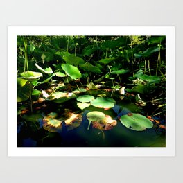 Lotus #1 Art Print