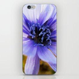 Italian Chicory iPhone Skin