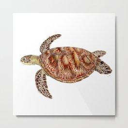 Green turtle Chelonia mydas Metal Print
