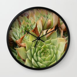 Hens and Chicks Plant Wall Clock