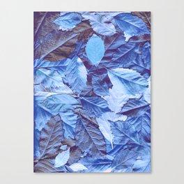 The blue carpet Canvas Print