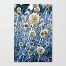 WILD THISTLE Canvas Print