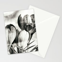 Monochrocus Stationery Cards