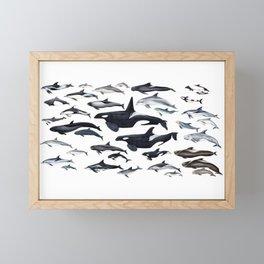 Dolphin diversity Framed Mini Art Print