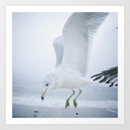 Seagull {One}  Art Print