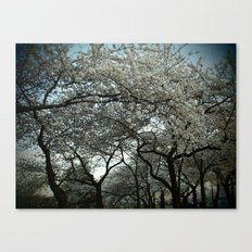 Cherry Blossoms III Canvas Print