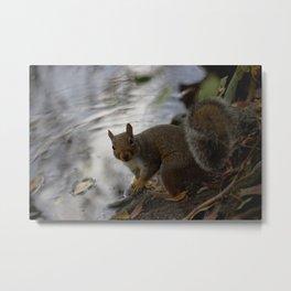 Pitville Squirrel Metal Print