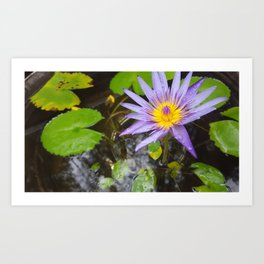 Enchanting Lotus Art Print