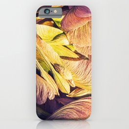 Samara maple tree dried fruit close-up in dark forest seed in spring season iPhone Case
