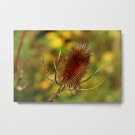 Thistle in Autum Metal Print