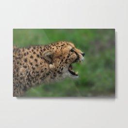 Cheetah Call Metal Print
