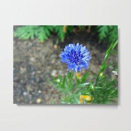 Delicate Blue Metal Print