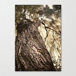 Ground Up Canvas Print