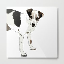 Jack Russell Terrier Dog Metal Print
