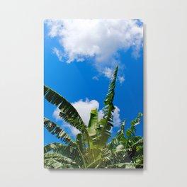 Banana Trees on the Arroyo Colorado (Texas) Metal Print
