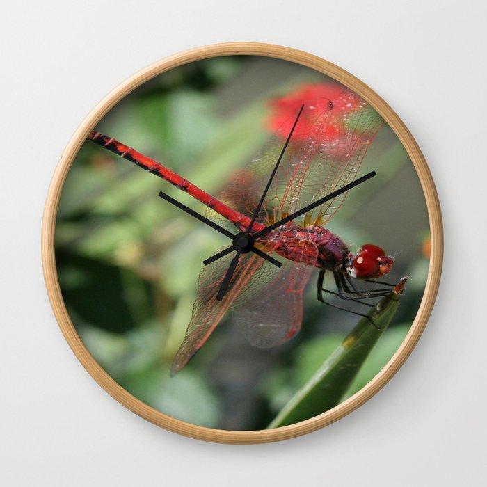 Red Skimmer or Firecracker Dragonfly Wall Clock