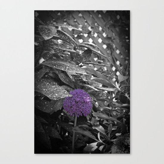 Purple Ornamental Onion Flower Black and White Photo Nature Canvas Print