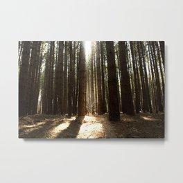 Begging the Tree Metal Print