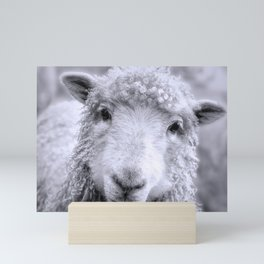 Ready For Your Closeup? Icelandic Sheep Face Mini Art Print