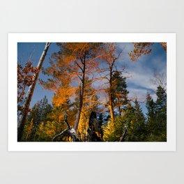 Burning trees Art Print