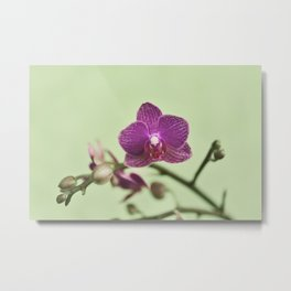 Orchid Arch Metal Print