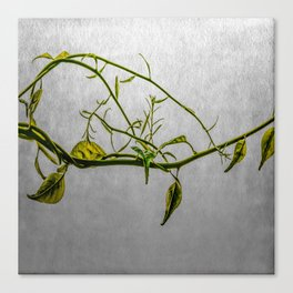 Magic Vine Canvas Print