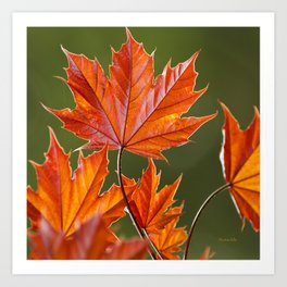 Abstract Maple Leaves Art Print