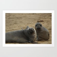 two elephant seal pups Art Print