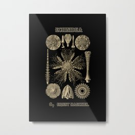"""Echinidea"" from ""Art Forms of Nature"" by Ernst Haeckel Metal Print"