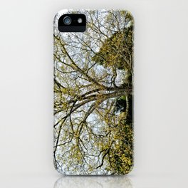 Great Oak at Winged Deer Park iPhone Case