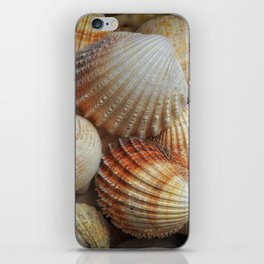 A collection of sea shells iPhone Skin