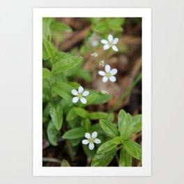 4 Tiny Wildflowers Art Print