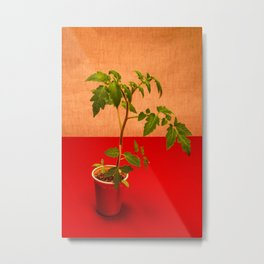 Very simple still life with tomatoes Metal Print