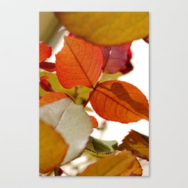 fall out. Canvas Print