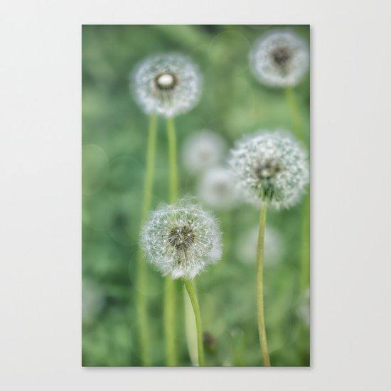Dandelion flower on green meadow Canvas Print
