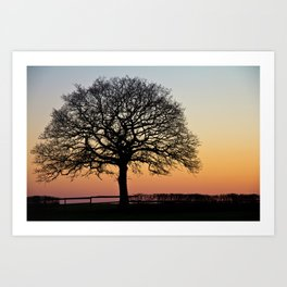 Lonely Tree Sunset Silhouette Art Print