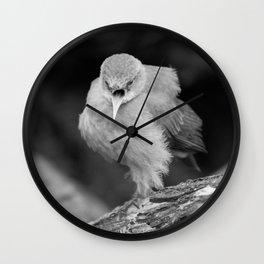 Bird - Furnarius Angry Wall Clock