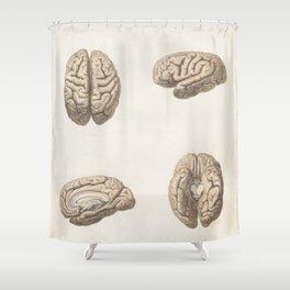 Brain anatomy Shower Curtain