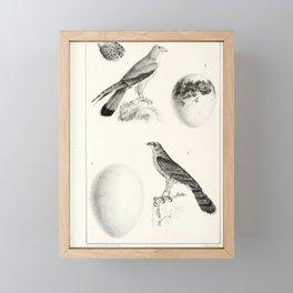 005 falco tinnunculoides astur palumbivorus6 Framed Mini Art Print
