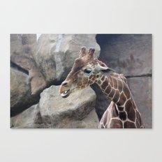 Giraffe Close up Canvas Print