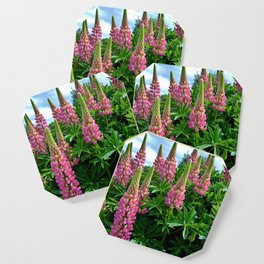 Rose Lupins in the Garden Coaster