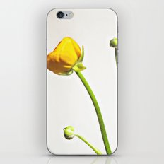 Golden Yellow Ranunculus Flowers on White iPhone & iPod Skin